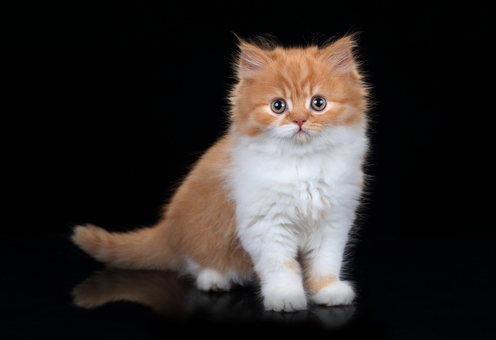 The biggest online Pet Shop offering food supplies & accessories for cats in Dubai, Abu Dhabi and all over uae